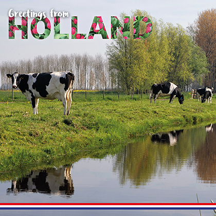 CARD & VASE GREETINGS FROM HOLLAND--2